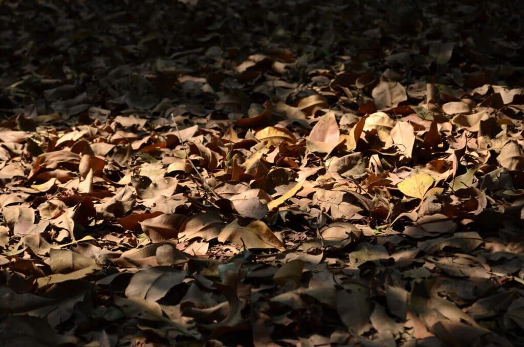 tierra de hojas 10 Consejos que NO Conocías para Ahorrar Agua en Casa Ahorrar